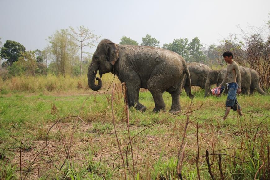 iwannabealady.com elephant sanctuary chiang mai thailand maerim