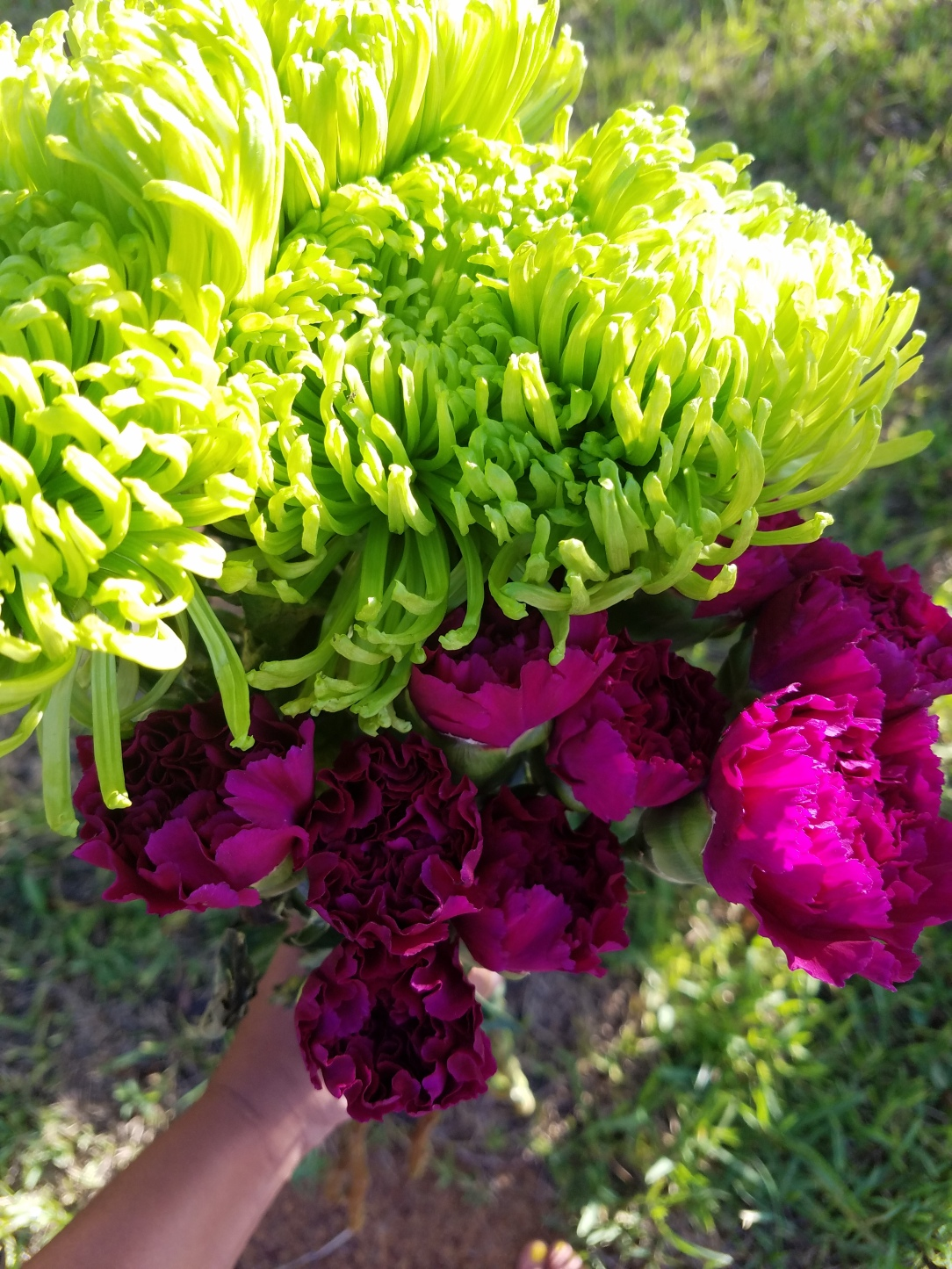 Jumbo green mums and pink carnations