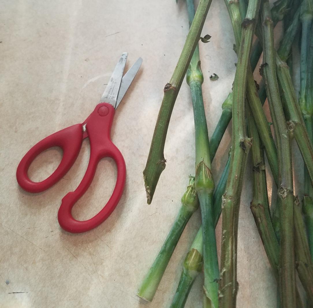 flower stems cut diagonally