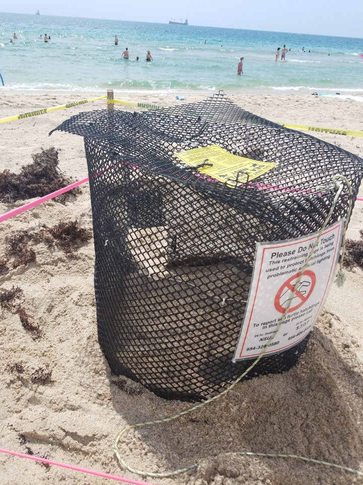 Broward County Sea Turtle Conservation Program Fort Lauderdale Florida