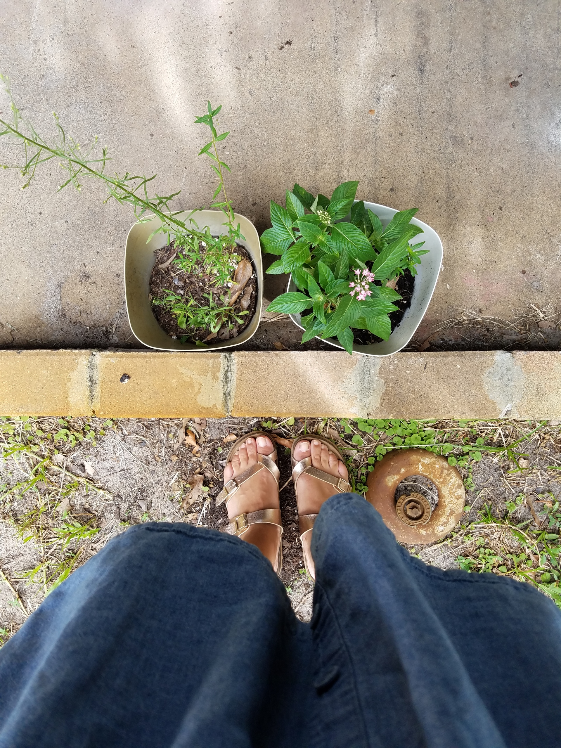 Two Flower Pots iwannabealady.wordpress.com