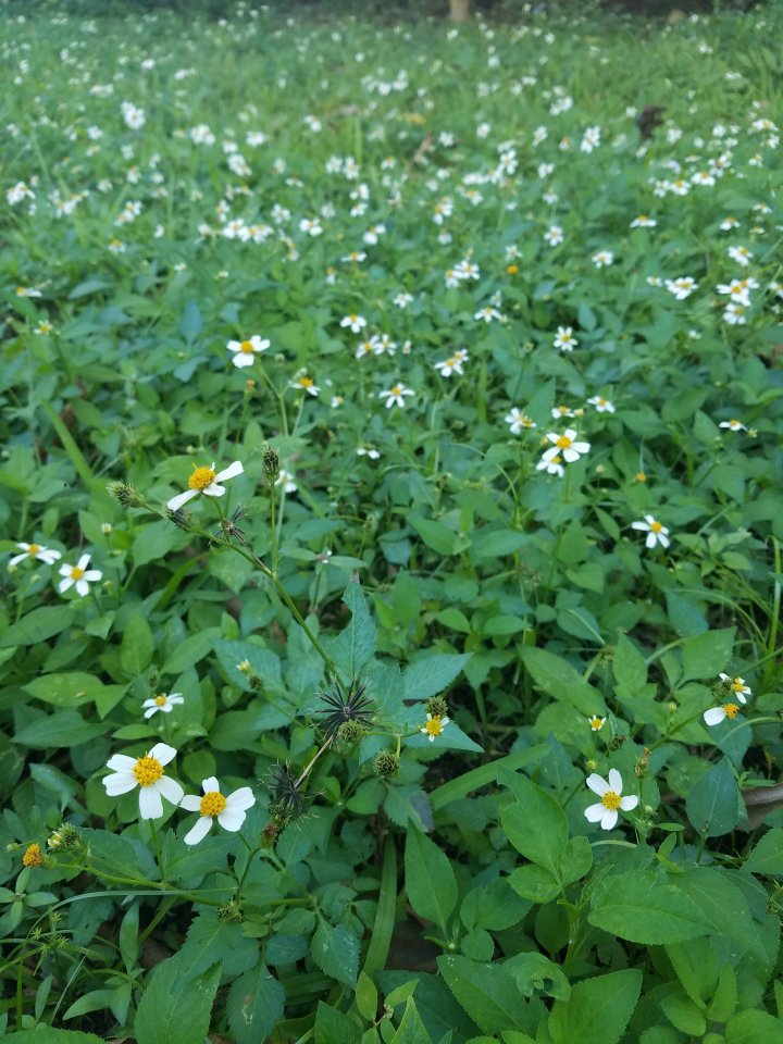 iwannabealady.com weeds and wildflowers