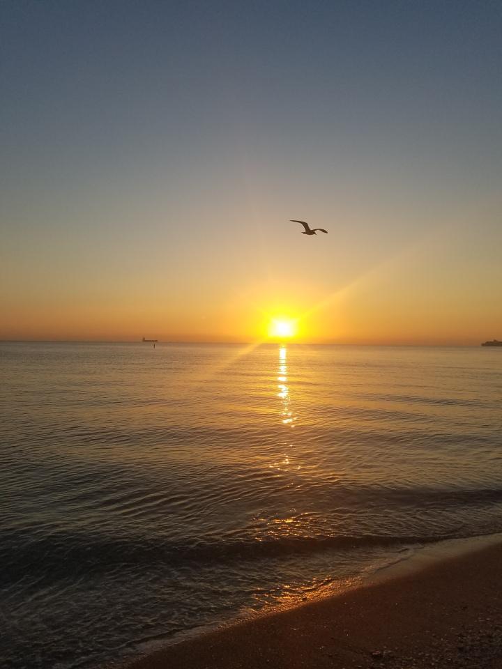 iwannabealady.com fort lauderdale beach sunrise water seagulls