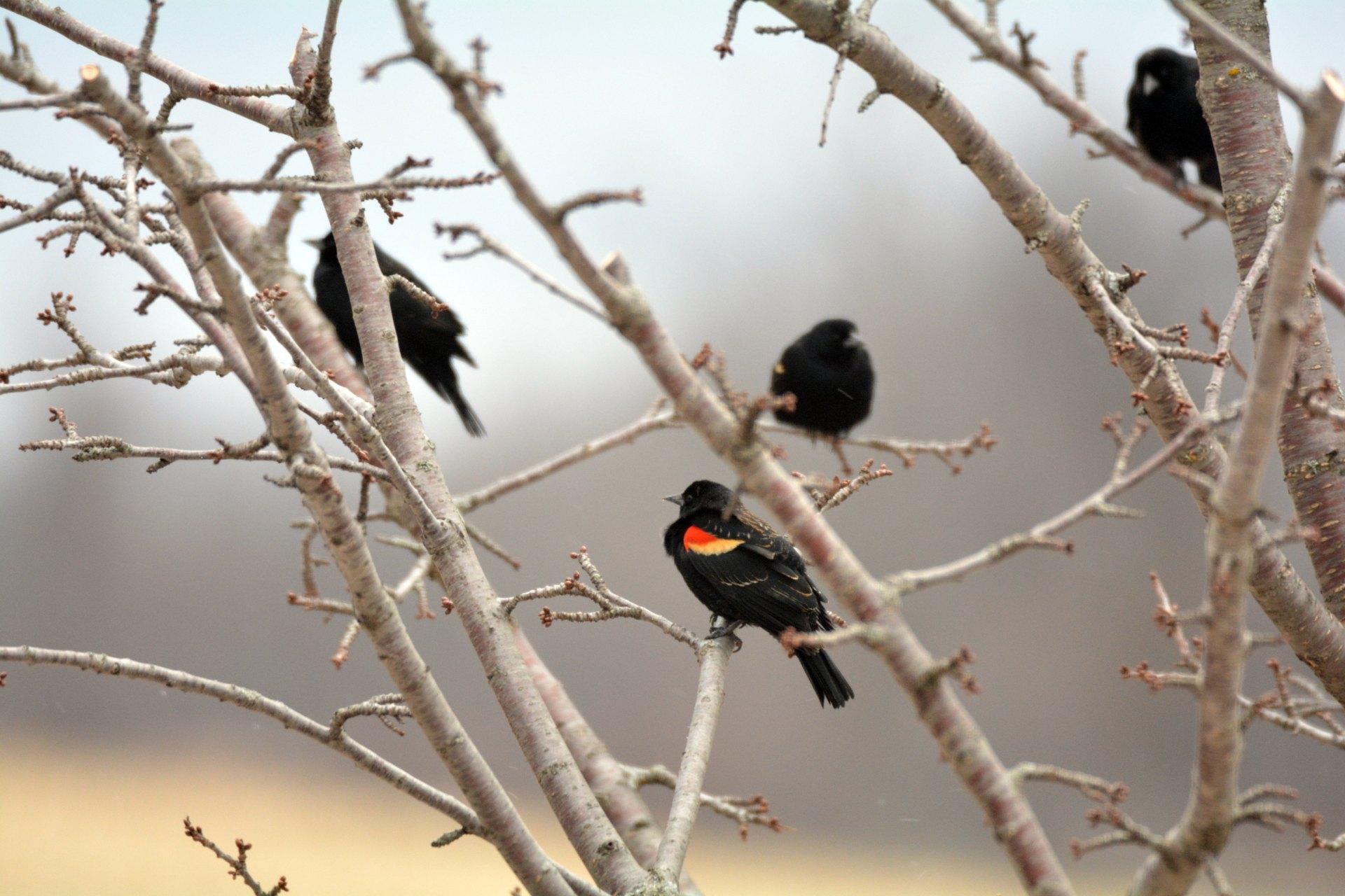 tony-fortunato-595062-unsplash iwannabealady.com birds poop on cars