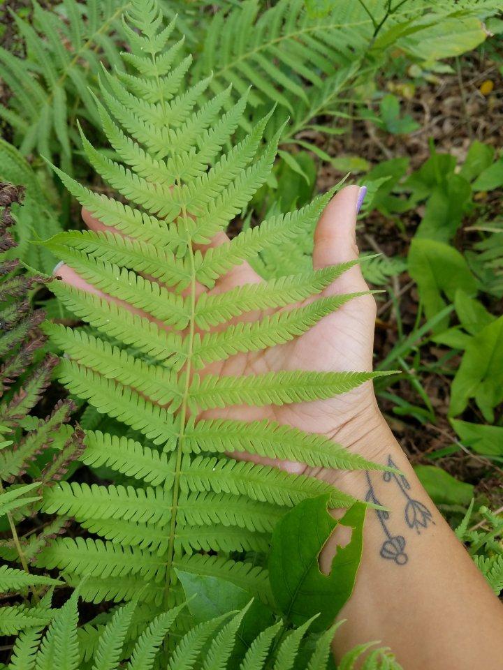 Nature Porn iwannabealady.com photography