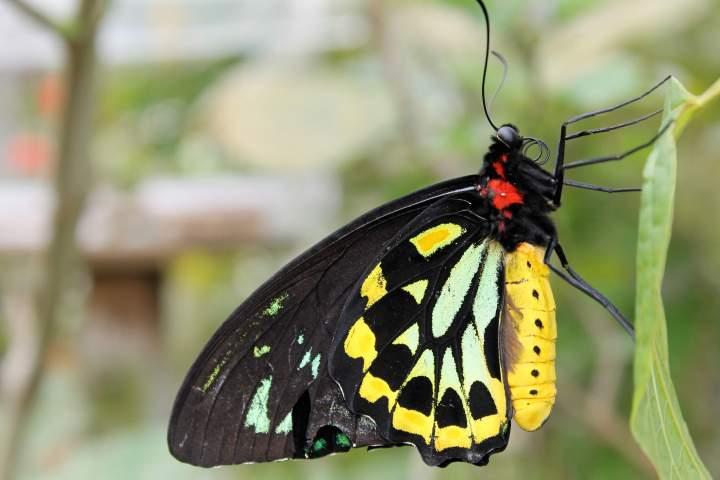 Lyz Durand iwannabealady.com nature photographer