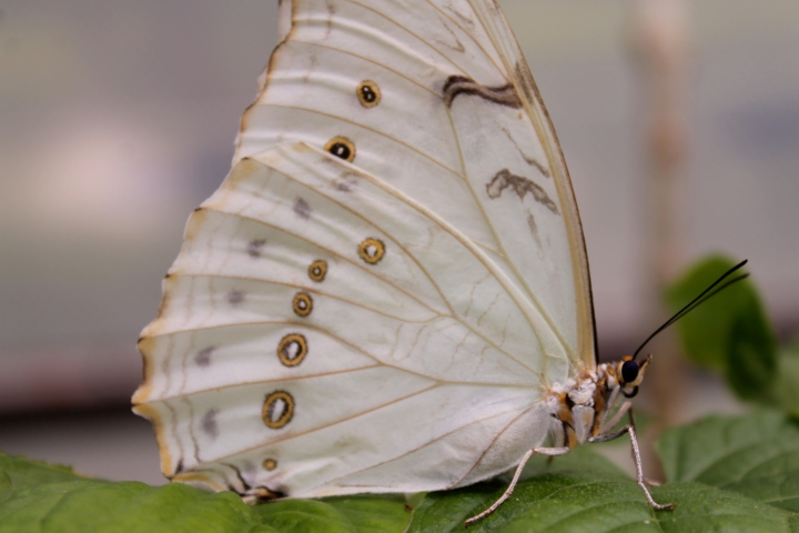 White butterfly Lyz Durand iwannabealady.com nature photographer